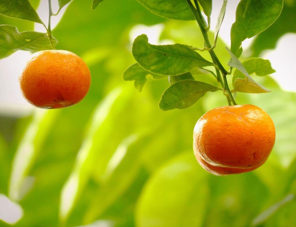 мандариновое масло